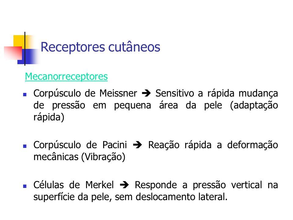 Receptores cutâneos Mecanorreceptores