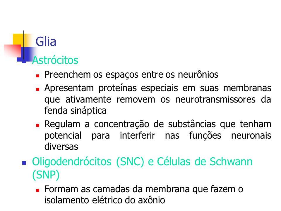 Glia Astrócitos Oligodendrócitos (SNC) e Células de Schwann (SNP)