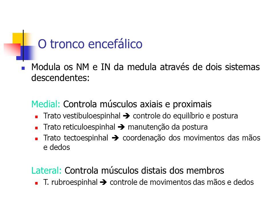 O tronco encefálico Modula os NM e IN da medula através de dois sistemas descendentes: Medial: Controla músculos axiais e proximais.
