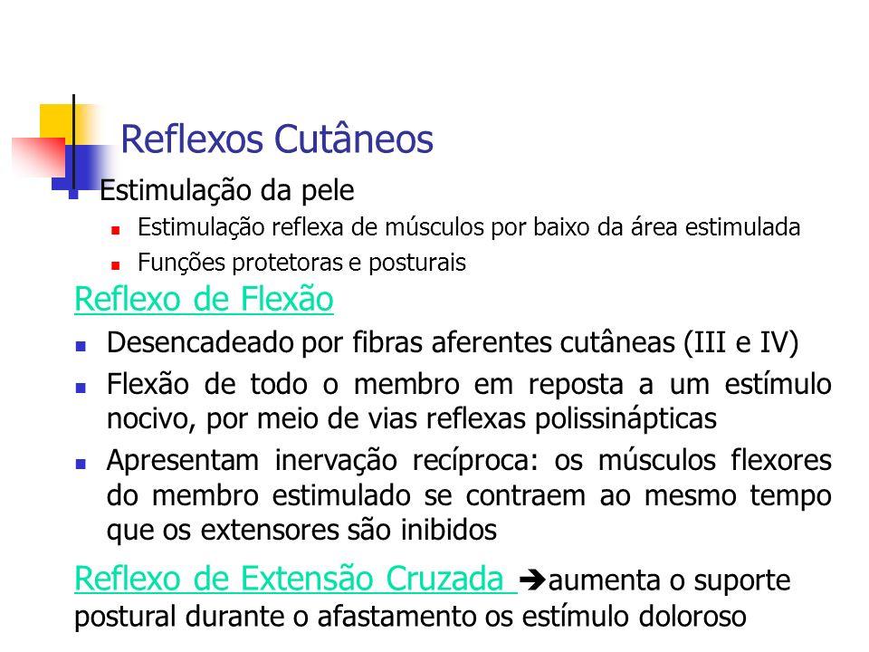 Reflexos Cutâneos Reflexo de Flexão