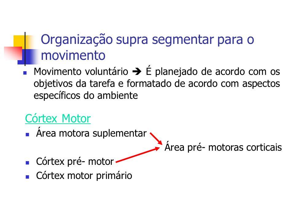 Organização supra segmentar para o movimento