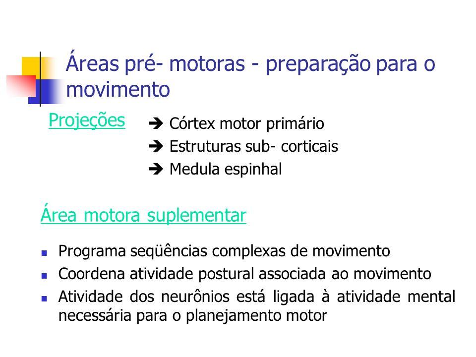 Áreas pré- motoras - preparação para o movimento