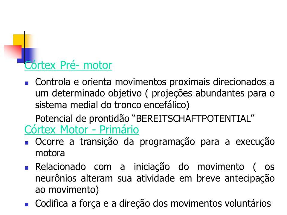 Córtex Motor - Primário