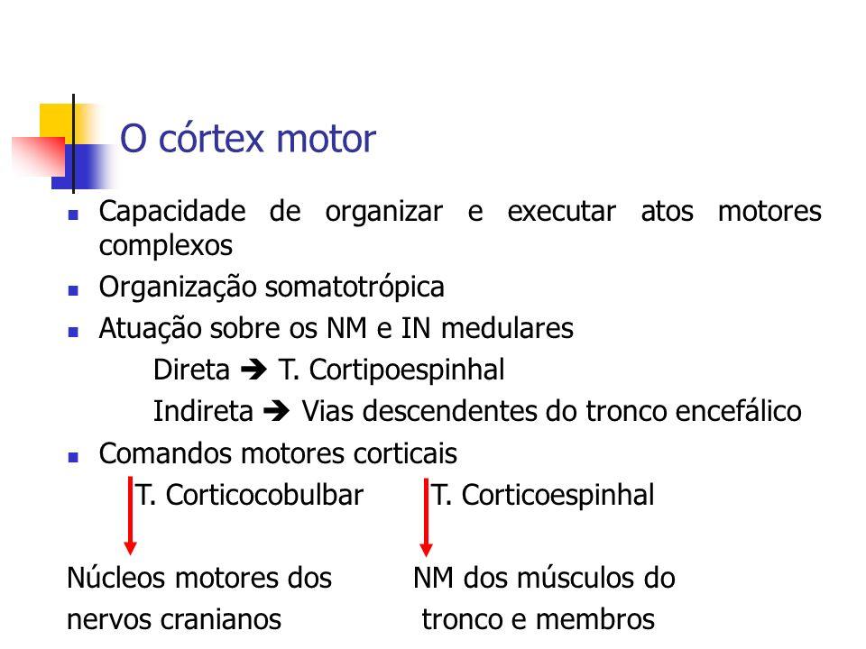 O córtex motorCapacidade de organizar e executar atos motores complexos. Organização somatotrópica.