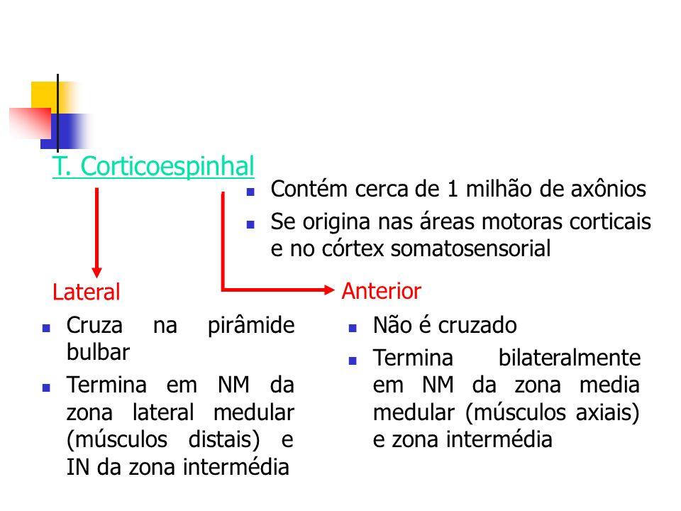 T. Corticoespinhal Contém cerca de 1 milhão de axônios