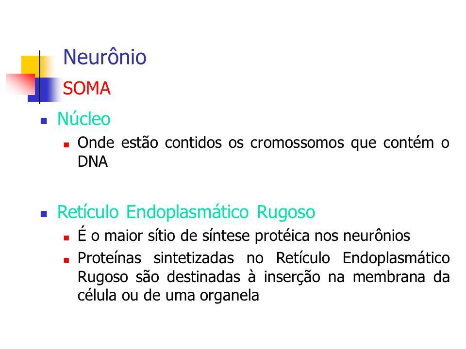 Neurônio SOMA Núcleo Retículo Endoplasmático Rugoso