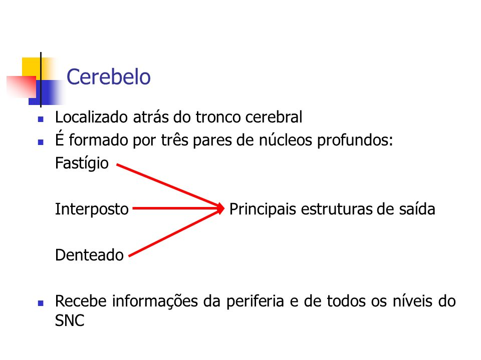 Cerebelo Localizado atrás do tronco cerebral