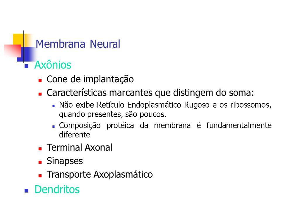 Membrana Neural Axônios Dendritos Cone de implantação