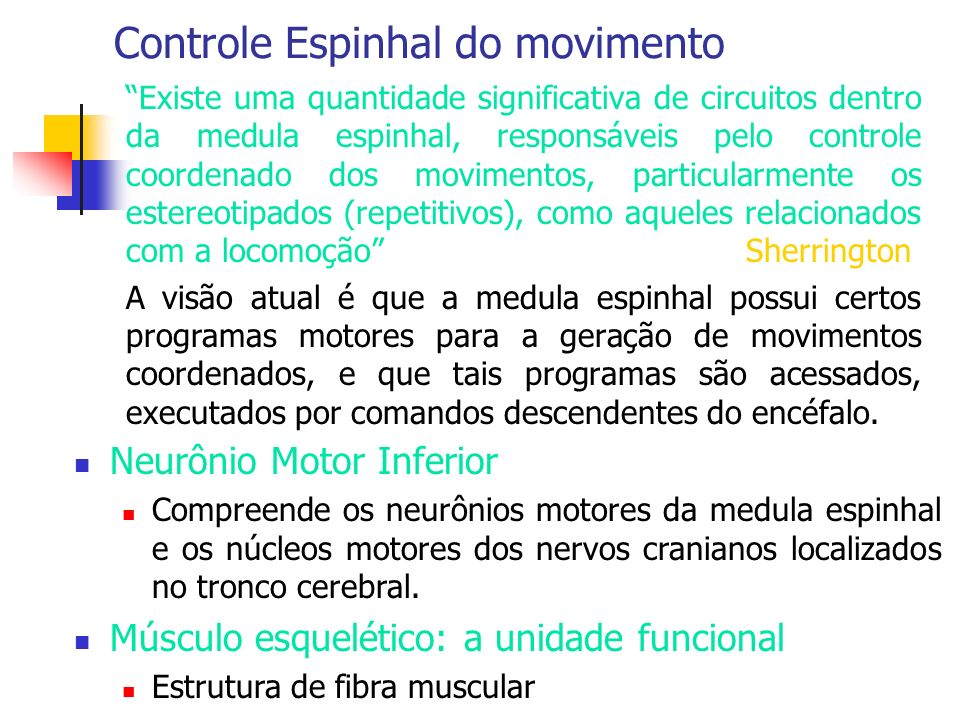 Controle Espinhal do movimento