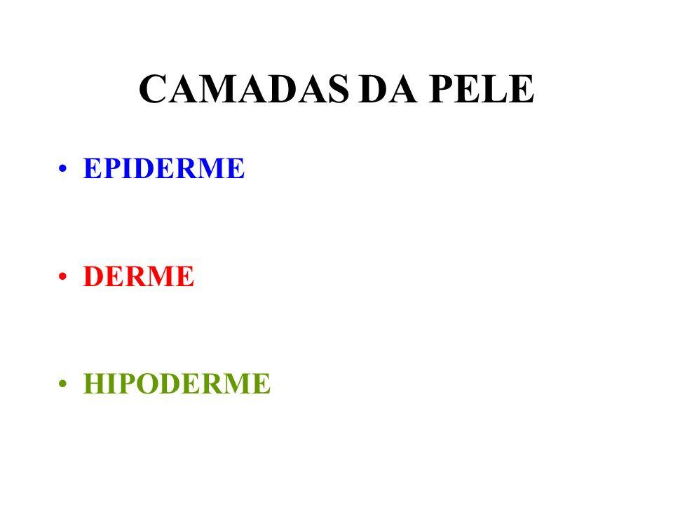 CAMADAS DA PELE EPIDERME DERME HIPODERME