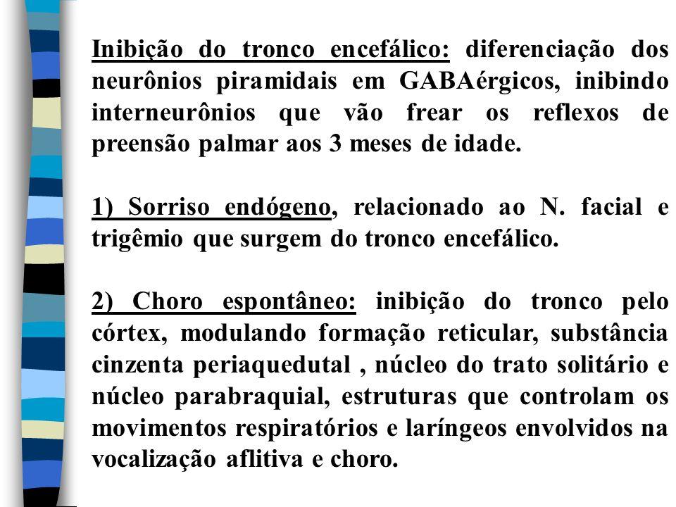 Inibição do tronco encefálico: diferenciação dos neurônios piramidais em GABAérgicos, inibindo interneurônios que vão frear os reflexos de preensão palmar aos 3 meses de idade.
