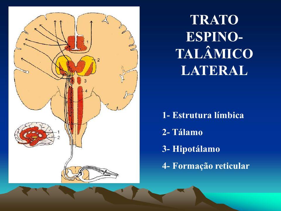 TRATO ESPINO-TALÂMICO LATERAL