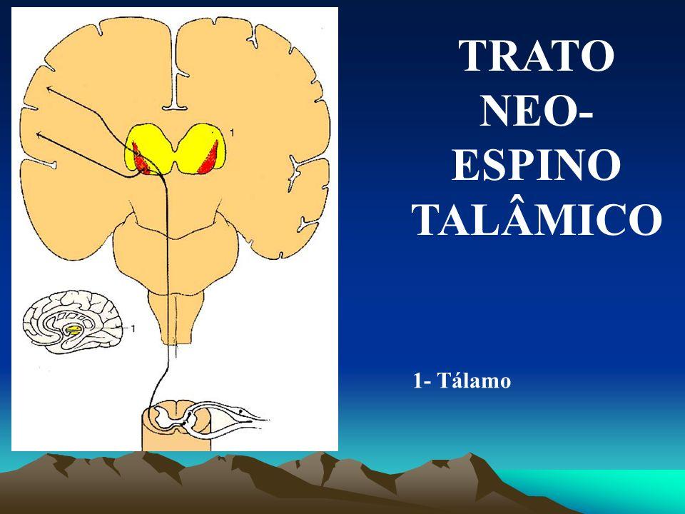 TRATO NEO-ESPINO TALÂMICO