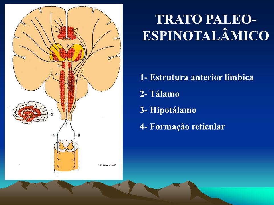 TRATO PALEO-ESPINOTALÂMICO