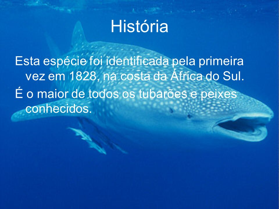 História Esta espécie foi identificada pela primeira vez em 1828, na costa da África do Sul.