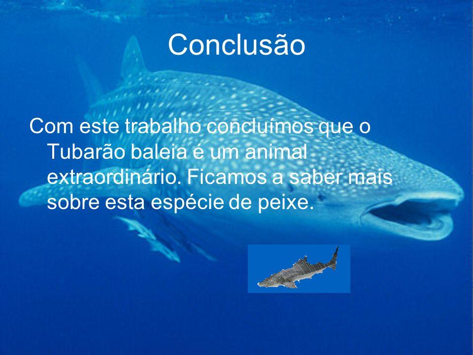 Conclusão Com este trabalho concluímos que o Tubarão baleia é um animal extraordinário.