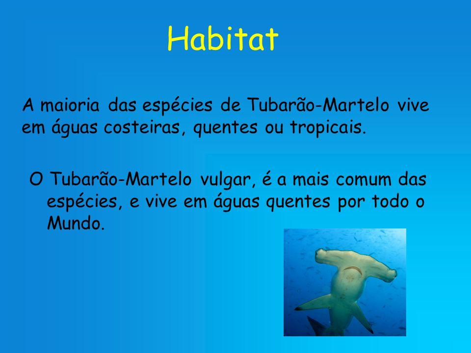 Habitat A maioria das espécies de Tubarão-Martelo vive em águas costeiras, quentes ou tropicais.