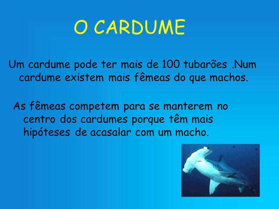 O CARDUME Um cardume pode ter mais de 100 tubarões .Num cardume existem mais fêmeas do que machos.
