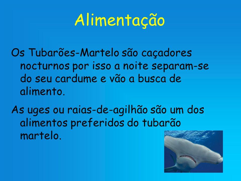 Alimentação Os Tubarões-Martelo são caçadores nocturnos por isso a noite separam-se do seu cardume e vão a busca de alimento.