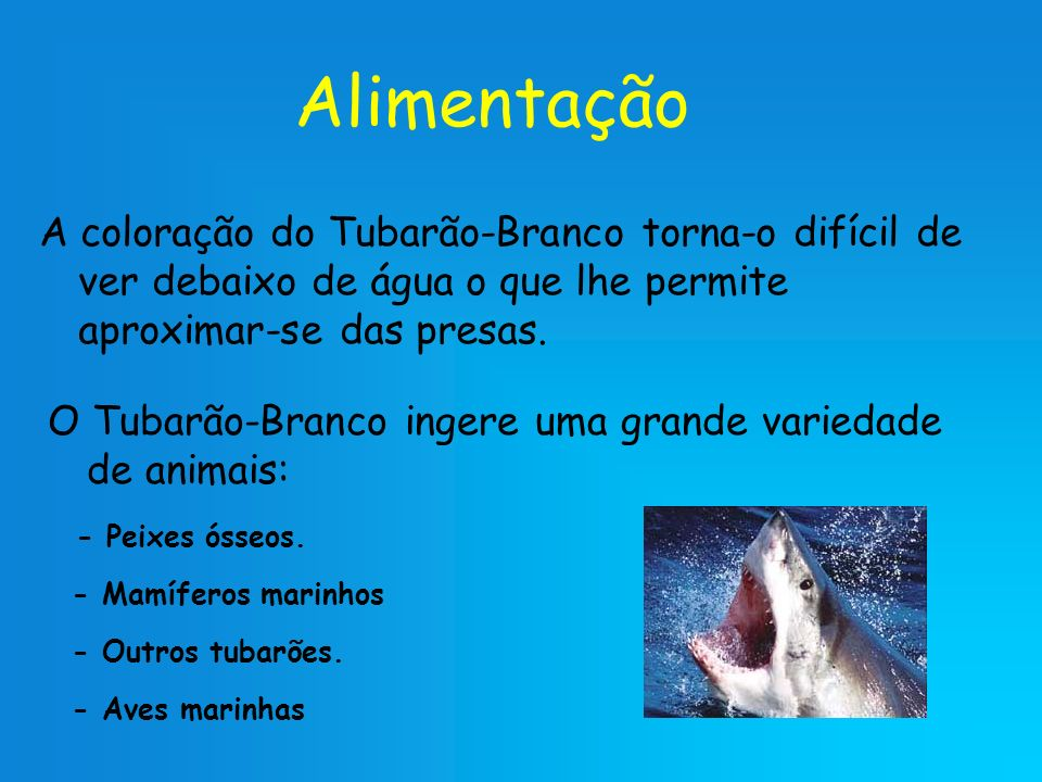 Alimentação A coloração do Tubarão-Branco torna-o difícil de ver debaixo de água o que lhe permite aproximar-se das presas.