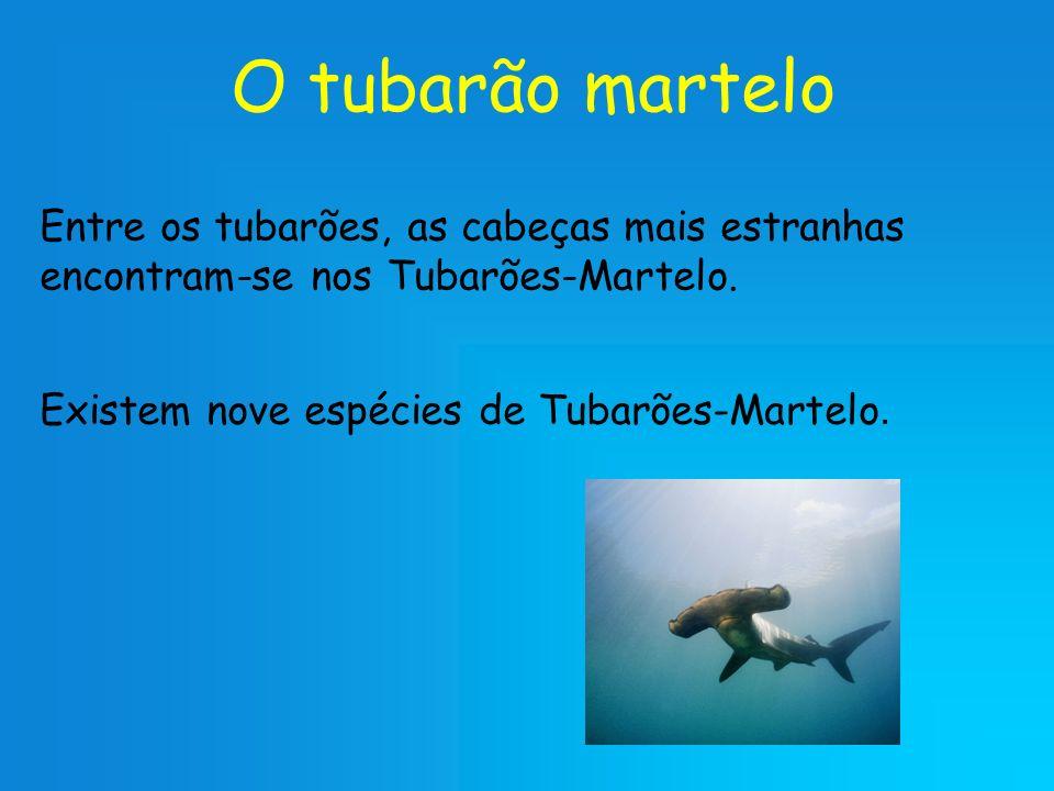 O tubarão martelo Entre os tubarões, as cabeças mais estranhas encontram-se nos Tubarões-Martelo.