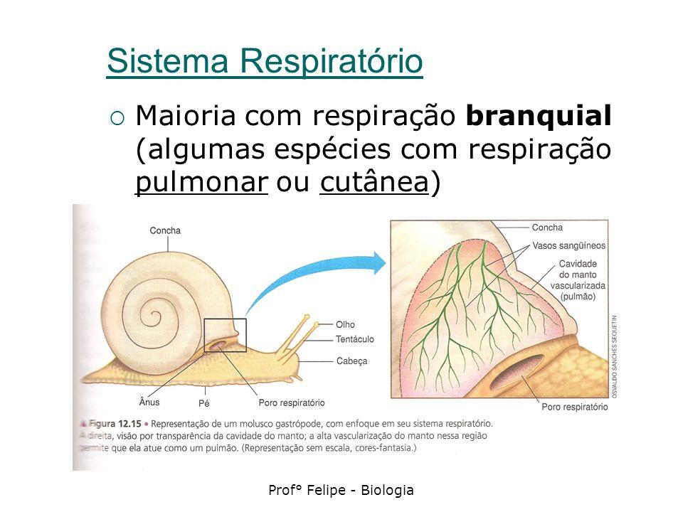 Prof° Felipe - Biologia