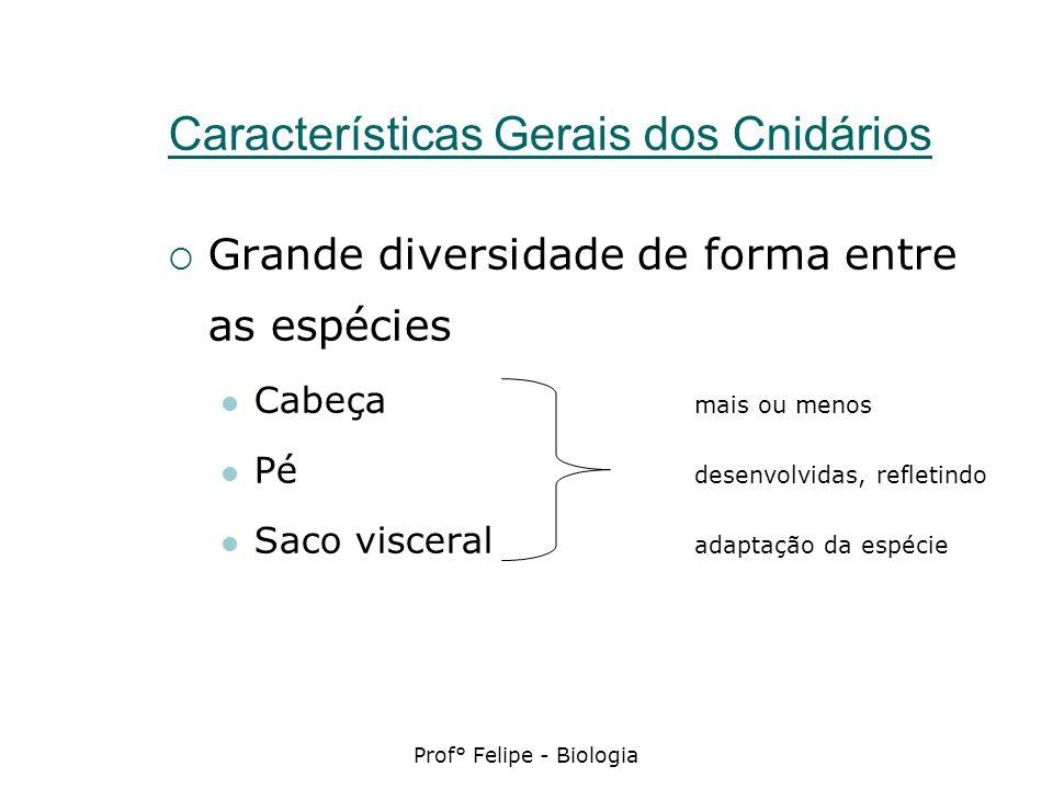 Características Gerais dos Cnidários