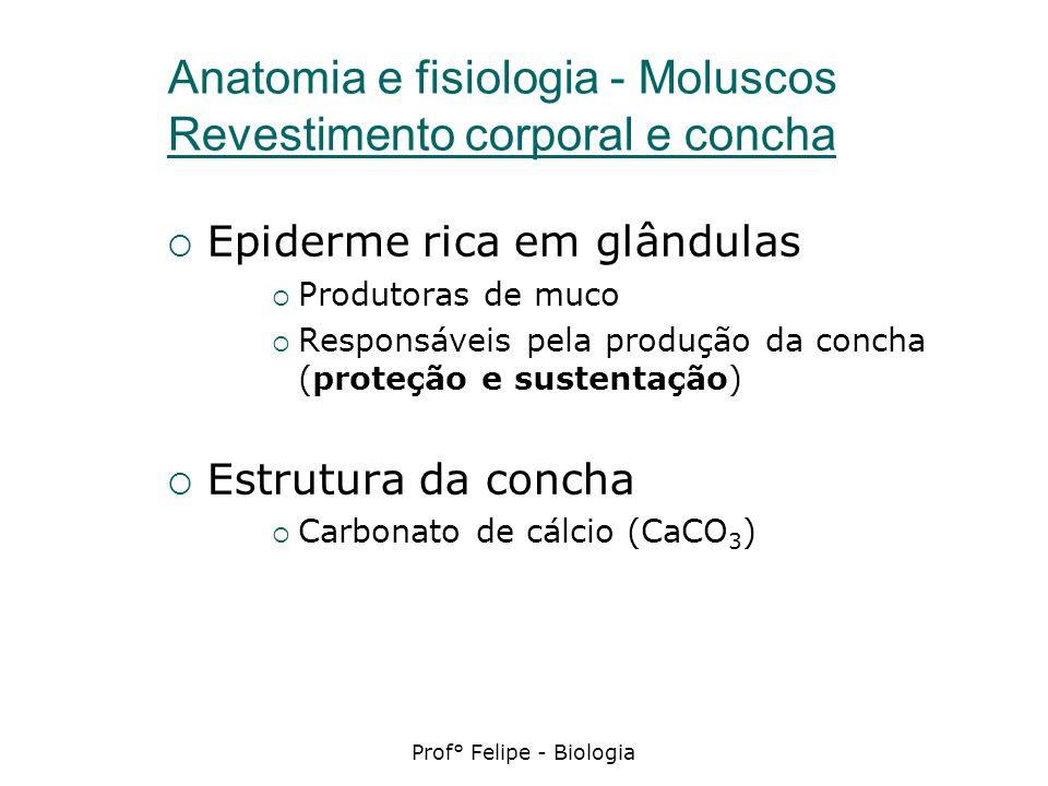Anatomia e fisiologia - Moluscos Revestimento corporal e concha