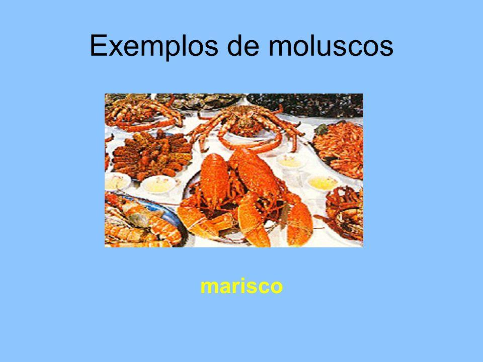 Exemplos de moluscos marisco