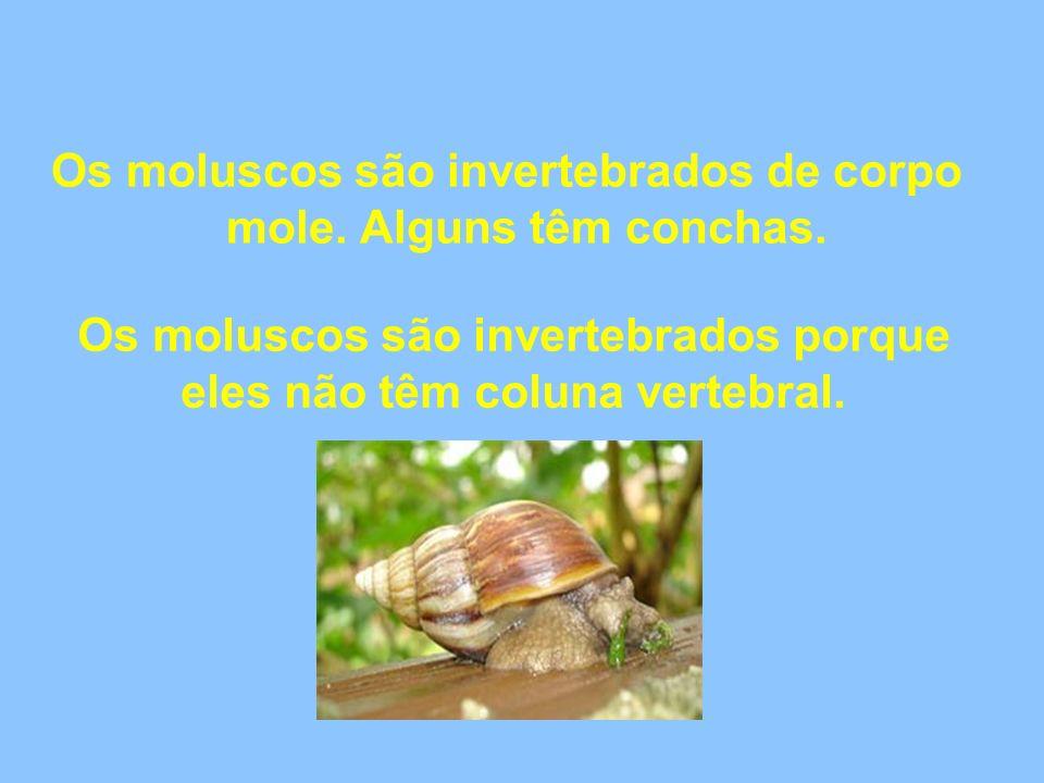 Os moluscos são invertebrados de corpo mole. Alguns têm conchas.