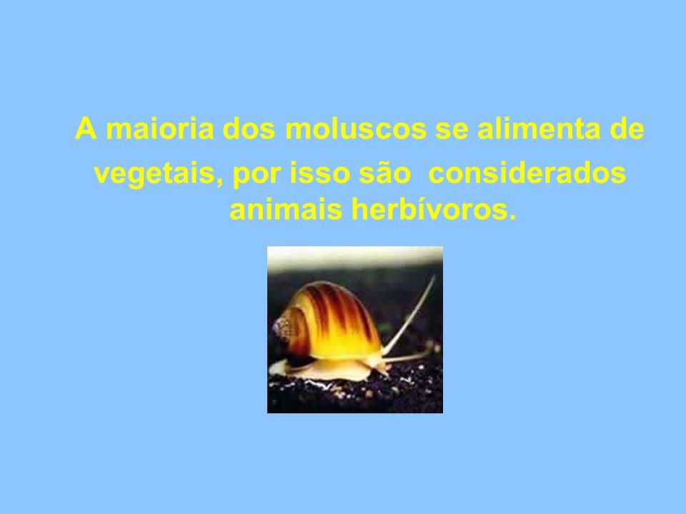 A maioria dos moluscos se alimenta de