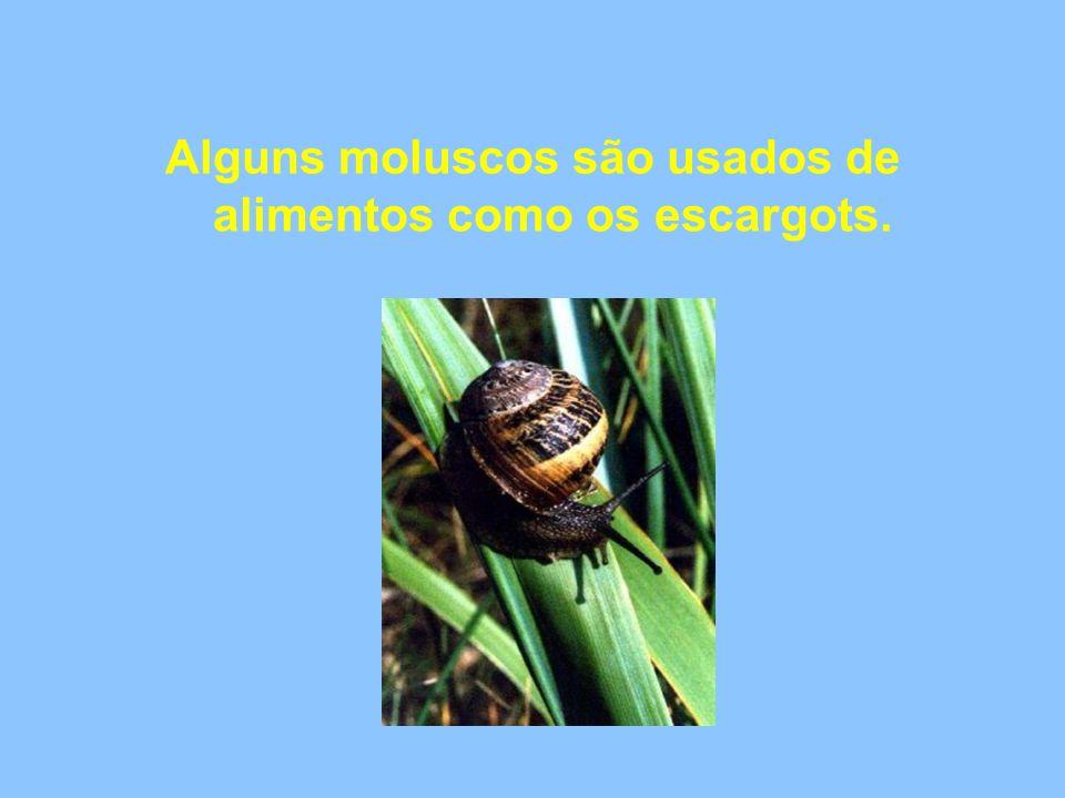 Alguns moluscos são usados de alimentos como os escargots.