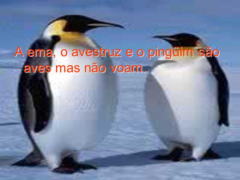 A ema, o avestruz e o pingüim são aves mas não voam.