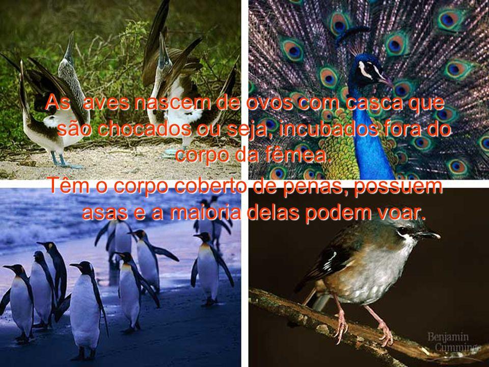 As aves nascem de ovos com casca que são chocados ou seja, incubados fora do corpo da fêmea.