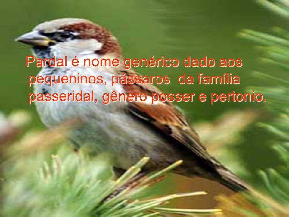 Pardal é nome genérico dado aos pequeninos, pássaros da família passeridal, gênero posser e pertonio.
