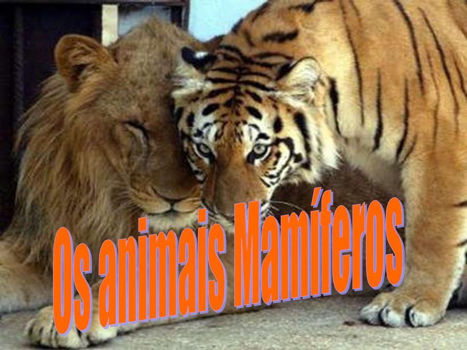 Os animais Mamíferos