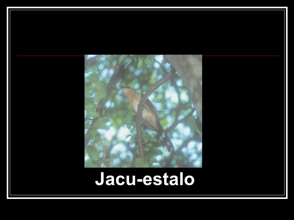 Jacu-estalo
