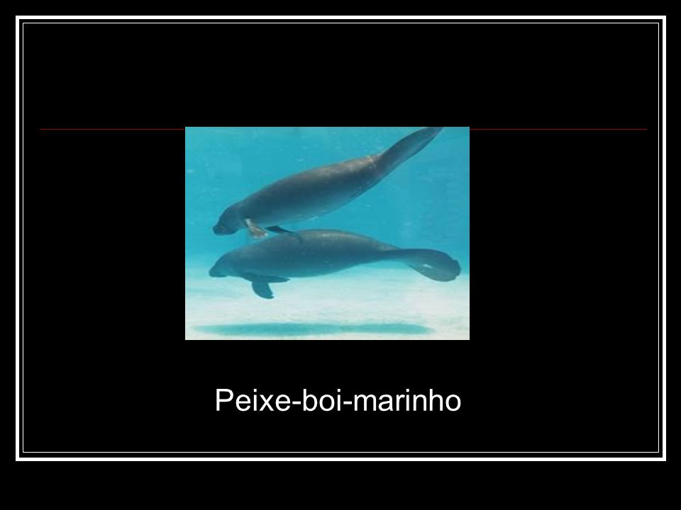Peixe-boi-marinho