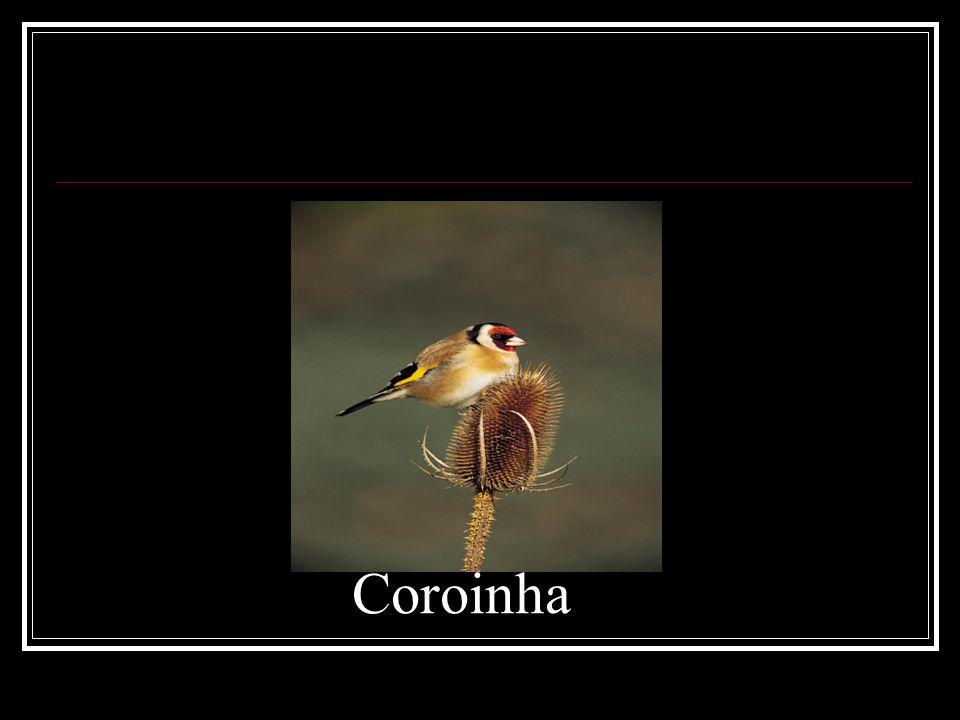 Coroinha