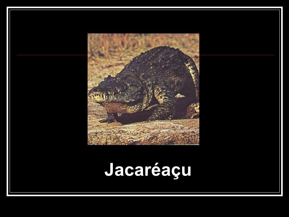 Jacaréaçu