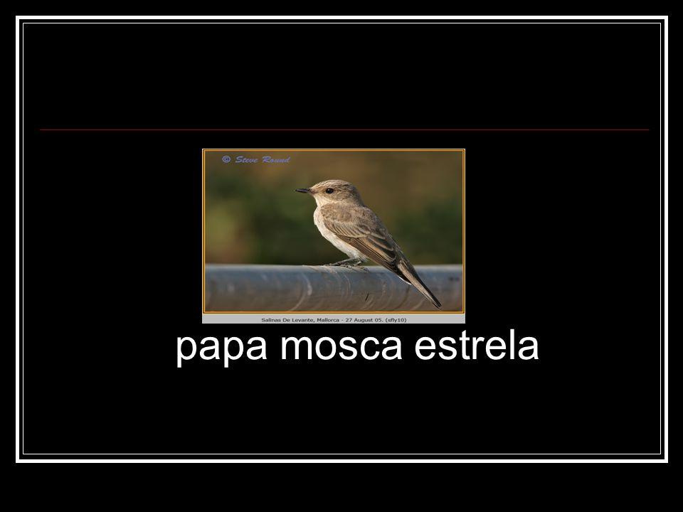 papa mosca estrela