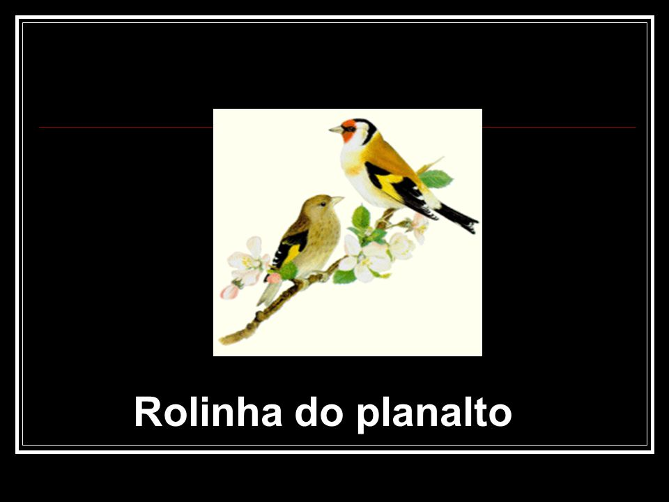 Rolinha do planalto