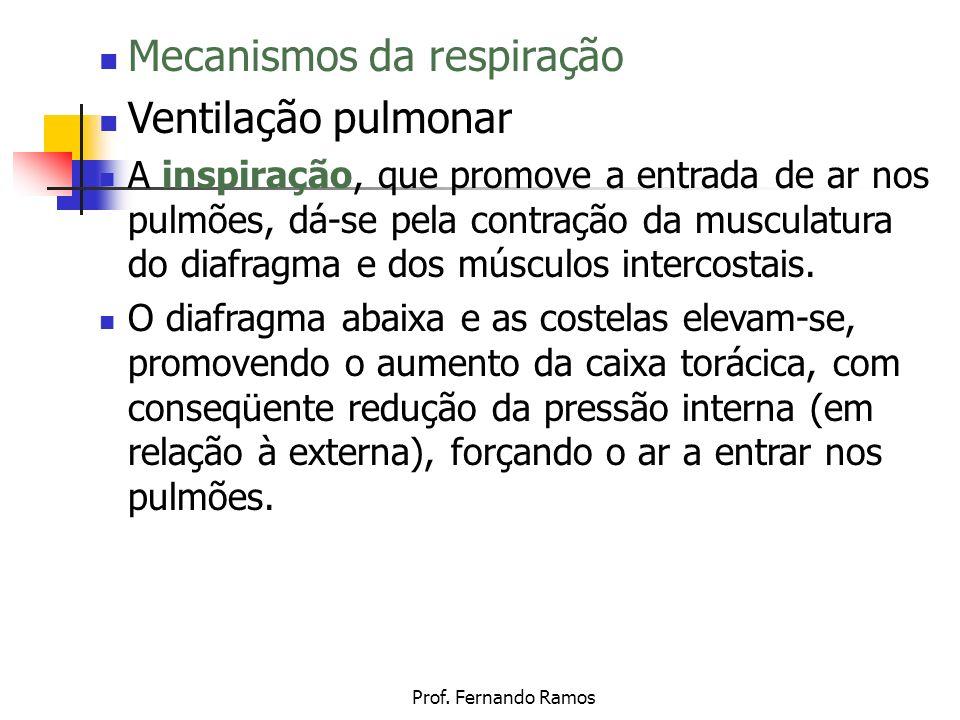 Mecanismos da respiração Ventilação pulmonar
