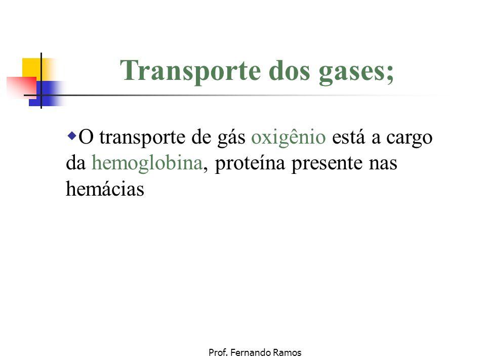 Transporte dos gases;O transporte de gás oxigênio está a cargo da hemoglobina, proteína presente nas hemácias.