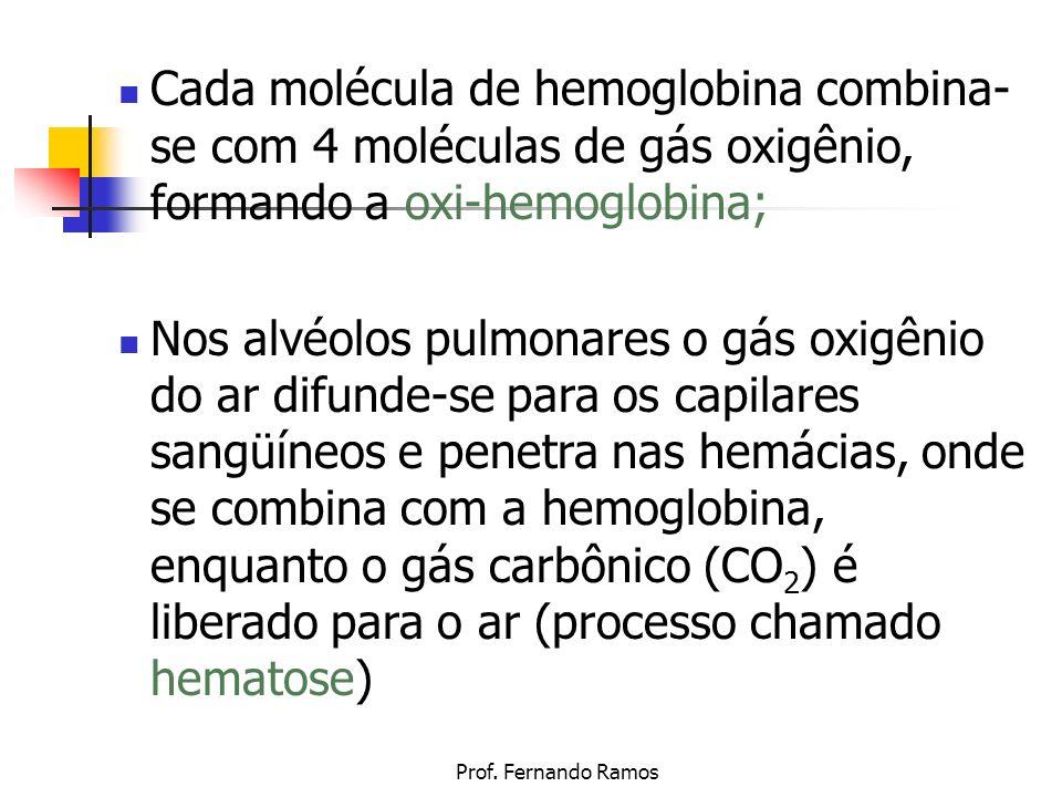 Cada molécula de hemoglobina combina-se com 4 moléculas de gás oxigênio, formando a oxi-hemoglobina;