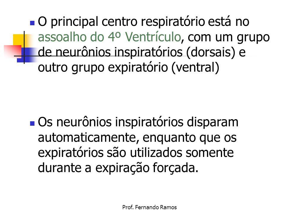 O principal centro respiratório está no assoalho do 4º Ventrículo, com um grupo de neurônios inspiratórios (dorsais) e outro grupo expiratório (ventral)