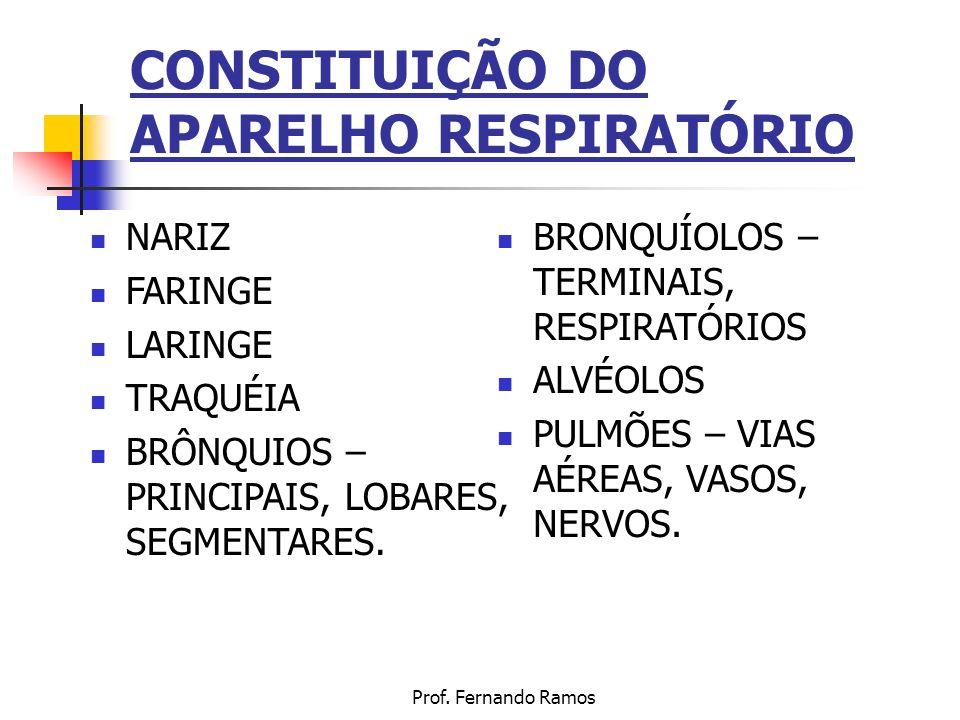 CONSTITUIÇÃO DO APARELHO RESPIRATÓRIO