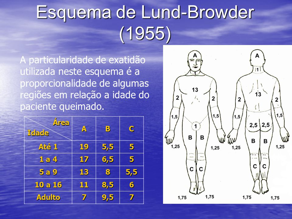 Esquema de Lund-Browder (1955)