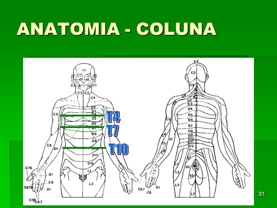 ANATOMIA - COLUNA T4 T7 T10