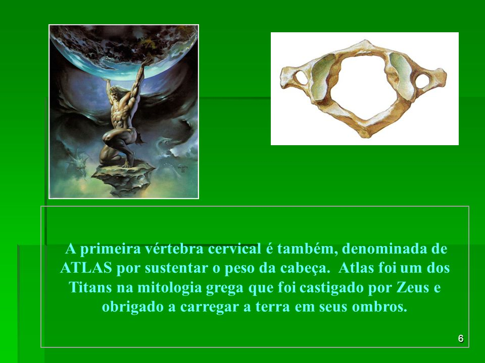 A primeira vértebra cervical é também, denominada de ATLAS por sustentar o peso da cabeça.
